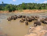 Slončki